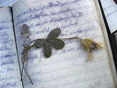 Дневник барышни
