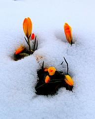 Зима крокує до весни